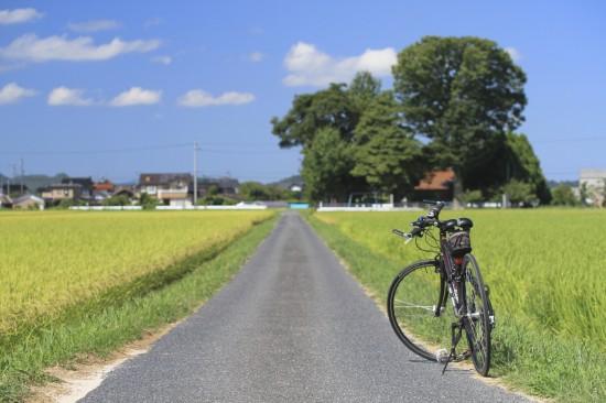 自転車とみどり