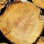 木と触れ合うことで得られる喜び~【2016年全国大会プレゼン動画第2弾!】