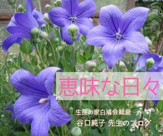 有機無農薬野菜・ノーミート料理レシピ【恵味な日々】